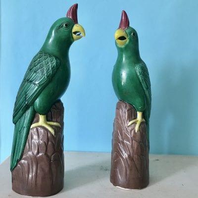 Green Parrot main