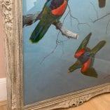 Parrots PR 2