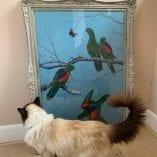 Parrots PR 5