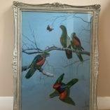 parrots 6