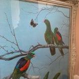 parrots PR 3